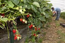 UK veg and fruit data shows negative trade balance and areas of self sufficiency